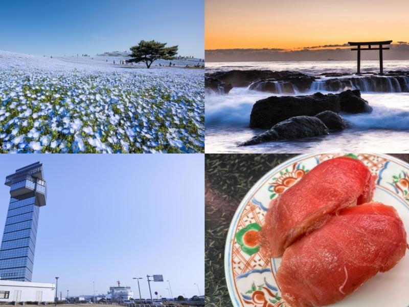 国営ひたち海浜公園に那珂湊おさかな市場も!国営ひたち海浜公園&周辺をめぐる1日観光モデルコース