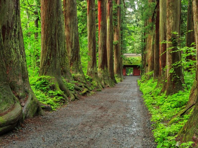 門の向こうは神々の世界!?神秘的なパワースポット戸隠神社奥社!