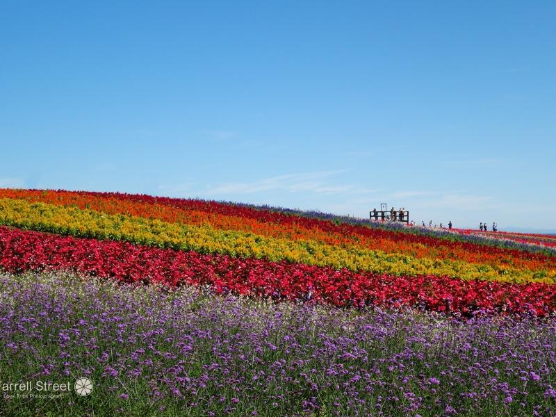 虹色に染まる「やくらいガーデン」満喫ガイド【宮城】