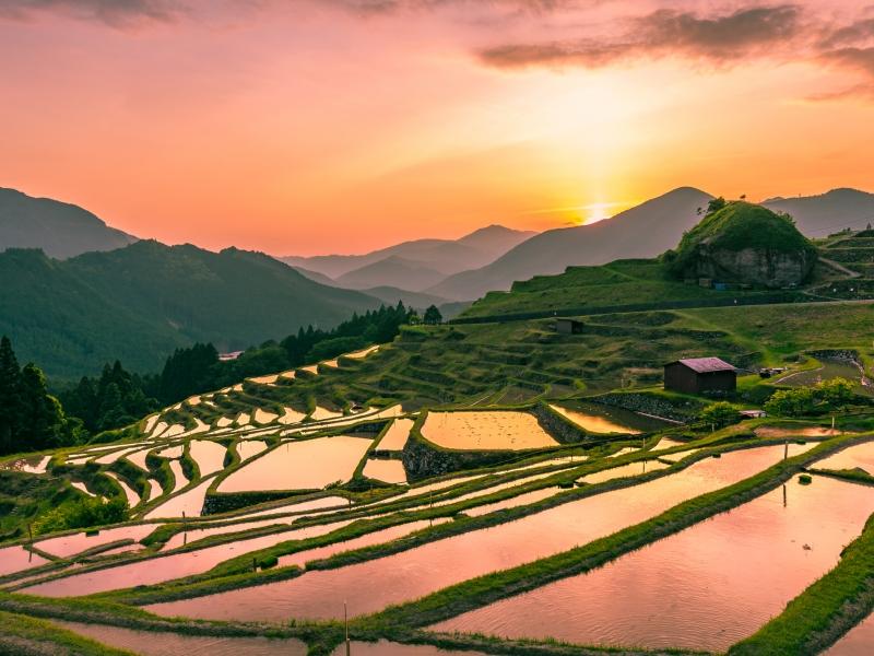 これぞ日本の原風景!三重県熊野にある丸山千枚田の絶景を見に行こう