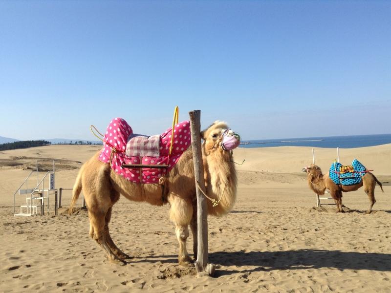 一度は行きたい!鳥取砂丘と周辺のおすすめスポット7選