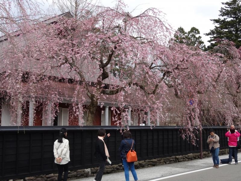 武家屋敷と蔵造りの町並みを歩く!秋田・角館観光の楽しみ方5選