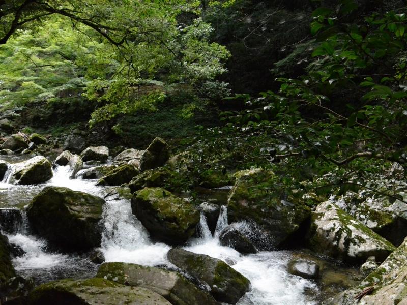 [三重]夏から秋は格別!赤目四十八滝は滝だけでなく道中も楽しい!