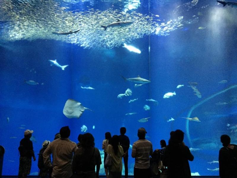 海の生き物と絶景を楽しもう!茨城県・大洗のおすすめスポット3選