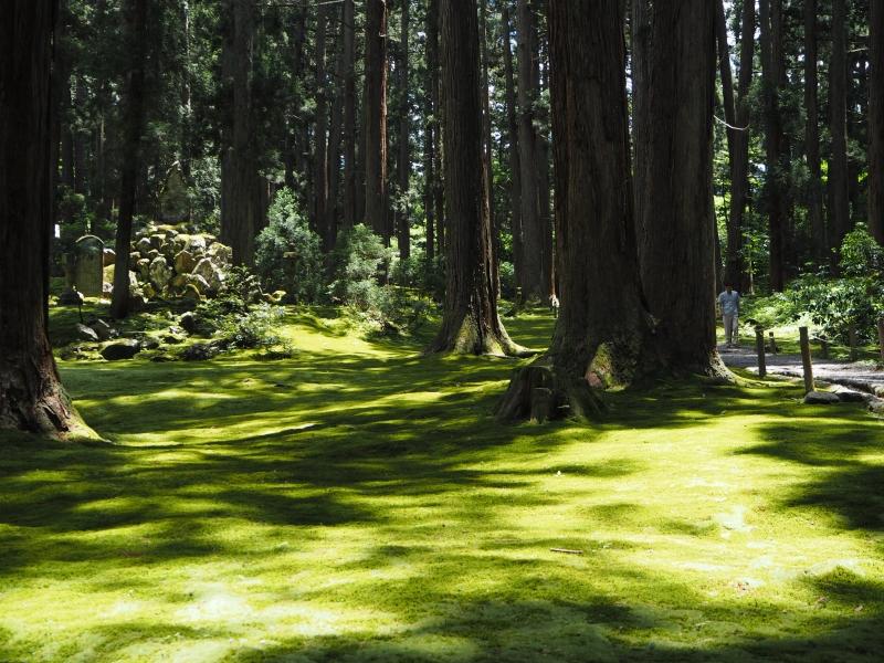 [福井]苔むす森。歴史とロマン漂う平泉寺白山神社を巡る。