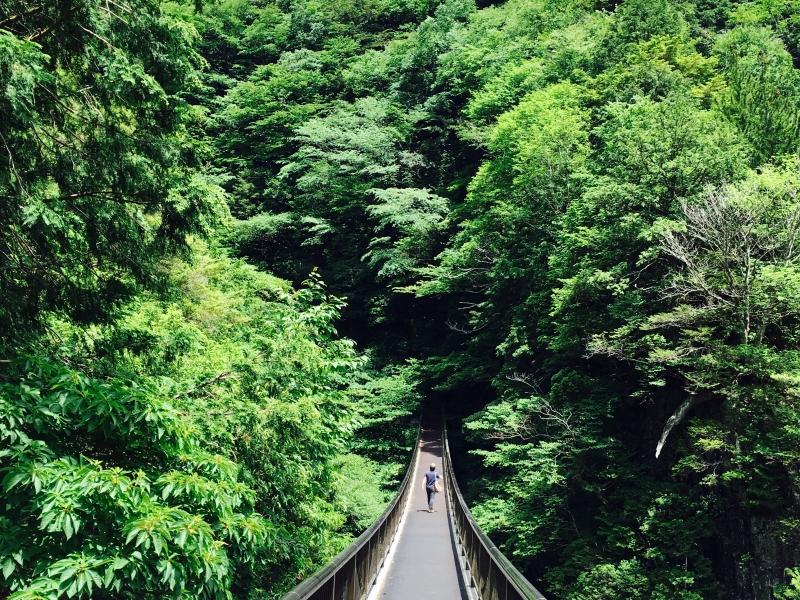[奈良]みたらい渓谷ハイキング~大峯山の清流をたどって秘湯・洞川温泉へ~