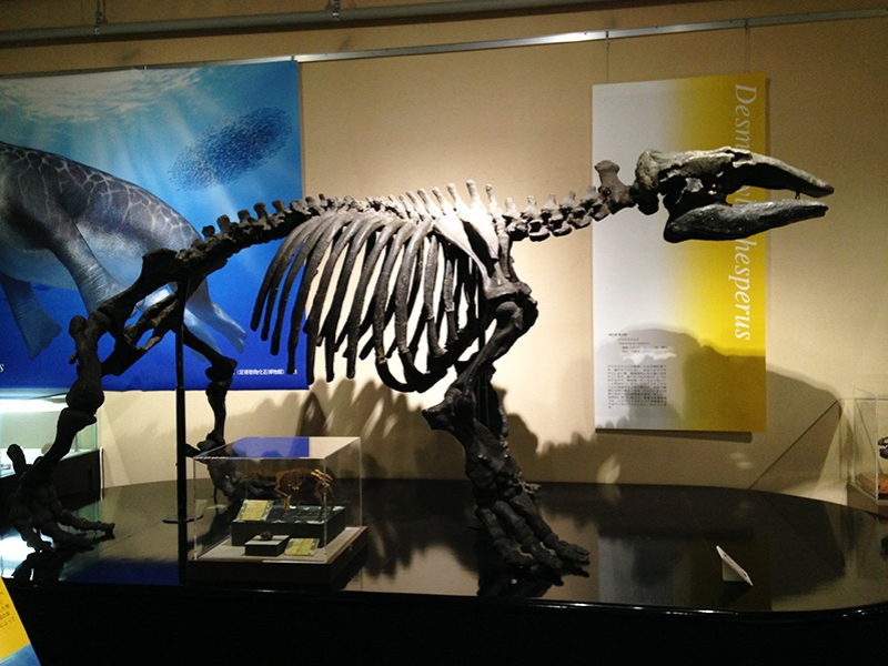 化石からノーベル賞まで! 北海道大学総合博物館の充実過ぎる展示品