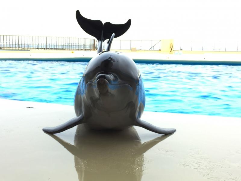[福岡]イルカ・ペンギンとの距離がぐっと近くに!マリンワールド海の中道