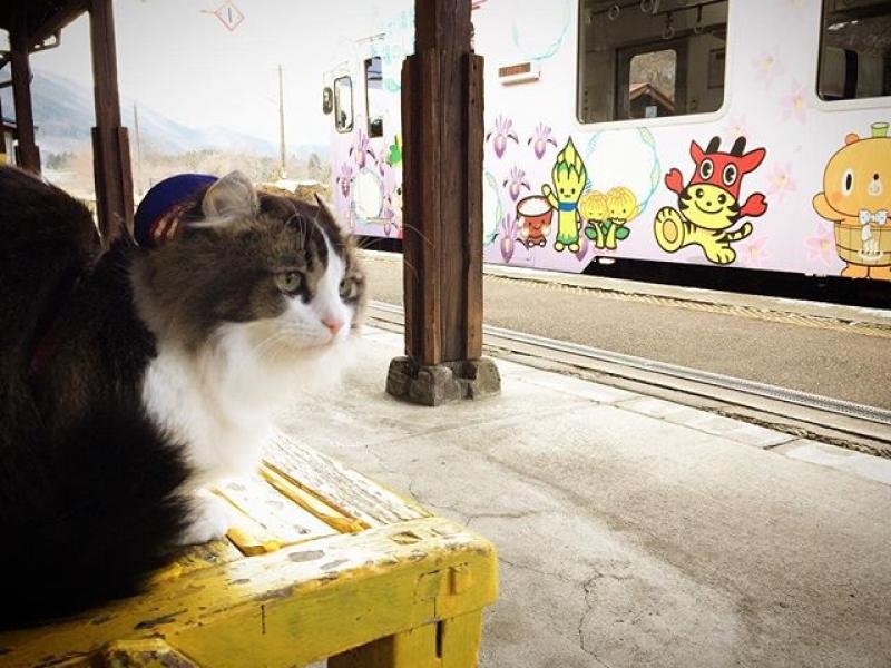 ねこ駅長さんが働く、のほほん癒しの駅♥福島・芦ノ牧温泉駅
