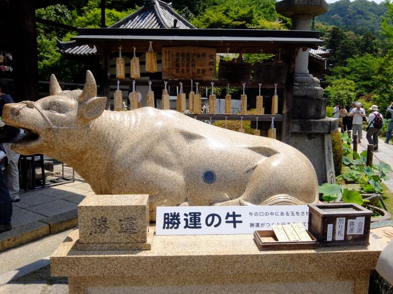 京都の花寺[三室戸寺]で、撫でて触って御利益ゲット!