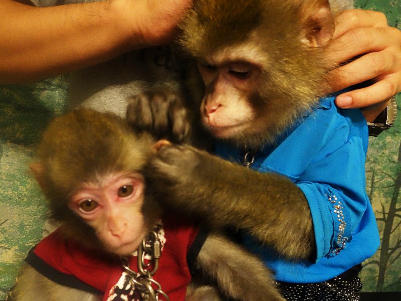 【栃木】「ビール頂戴!」で、猿に接客してもらえる驚きの居酒屋かやぶき