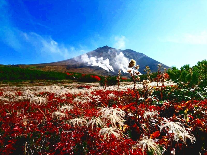 【北海道・旭岳】日本一早い紅葉狩り、大雪山連邦でハイキング