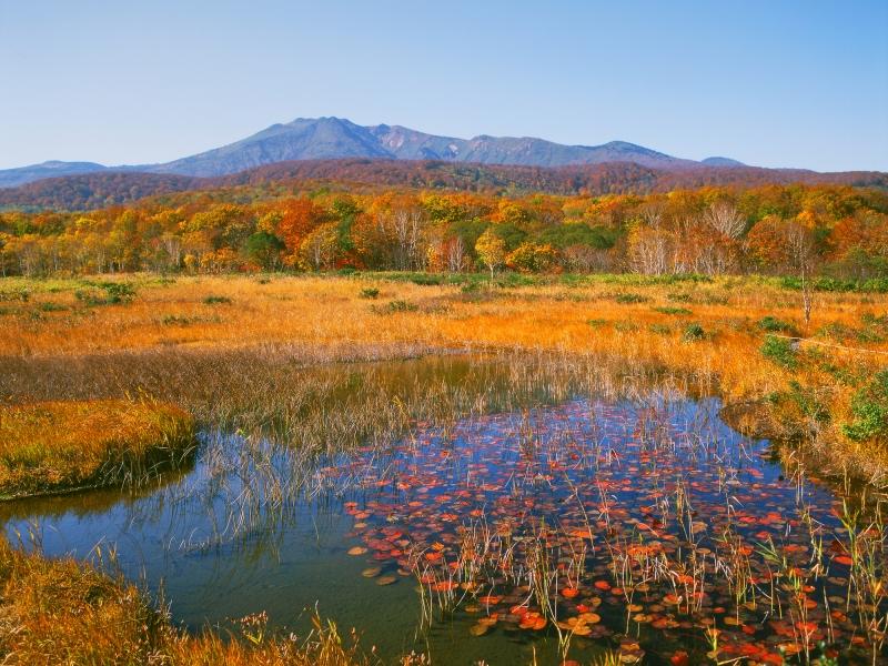 【青森】八甲田山麓に秋がやって来た!田代平湿原で紅葉狩り散策を楽しもう