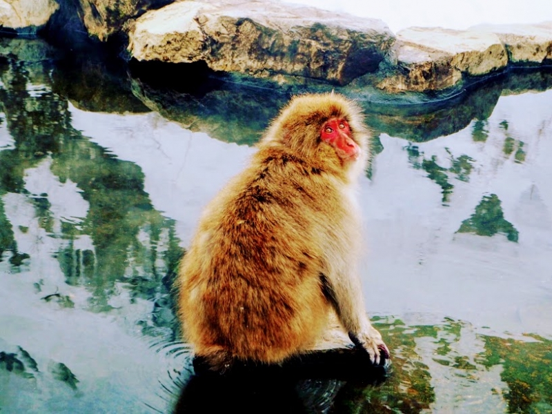 【長野】温泉に浸かるサル!地獄谷野猿公苑へ行こう