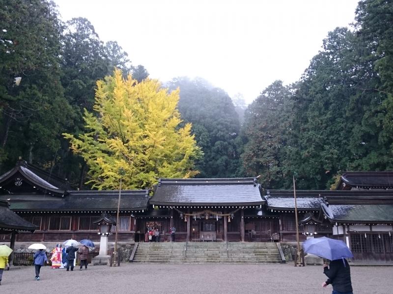 【岐阜・高山】水無神社で天皇ご即位に献上されるイチイの木の勺の秘密