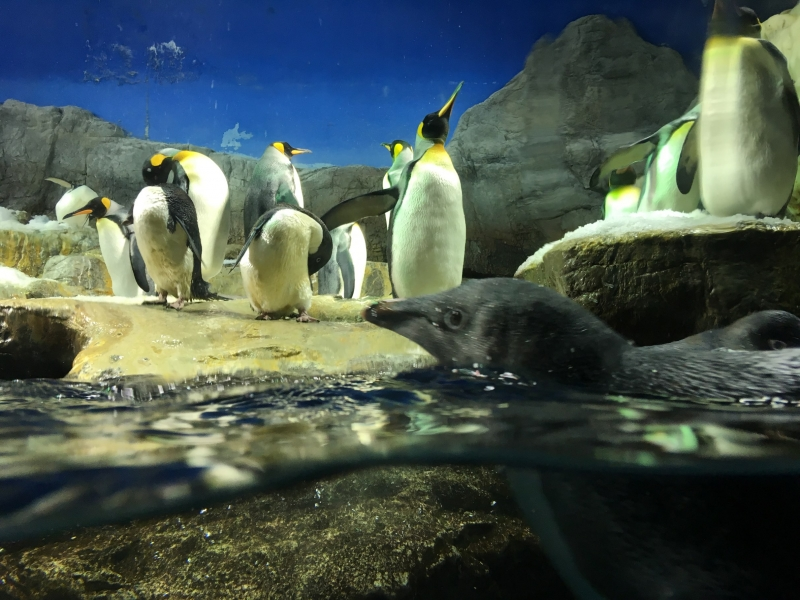 距離感!目線!やっぱりスゴイ!大阪「海遊館」のオモロイ展示5選