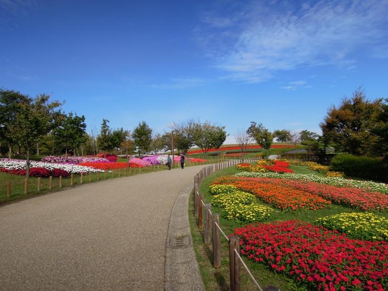 【奈良】カフェもあるよ!無料で四季折々に花が楽しめる馬見丘陵公園