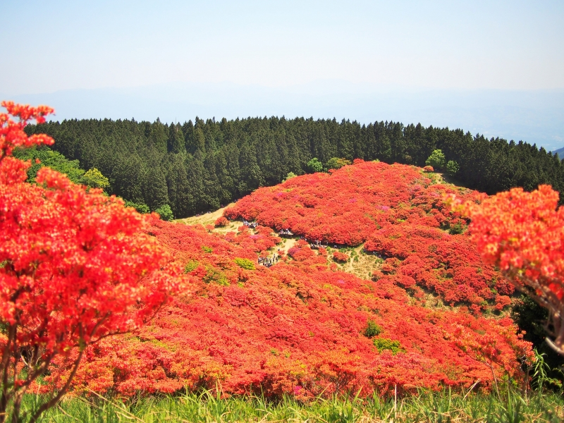 【奈良】一目百万本のつつじを大和葛城山に見に行こう!