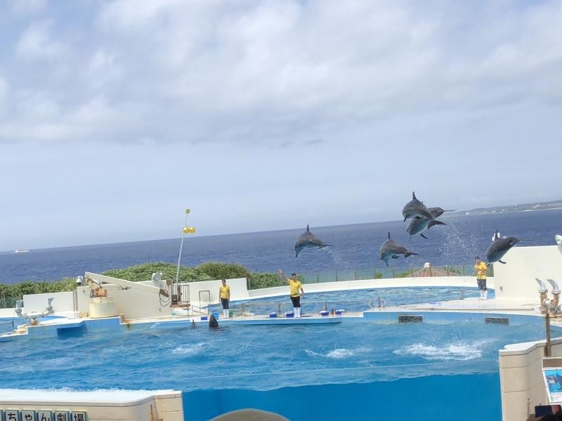 【沖縄美ら海水族館】のチケットは買わなくてOK!イルカショーはなぜ無料?