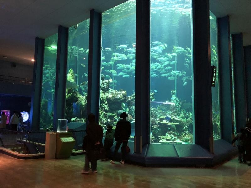 【静岡】三保松原も近く!東海大学海洋科学博物館・自然史博物館