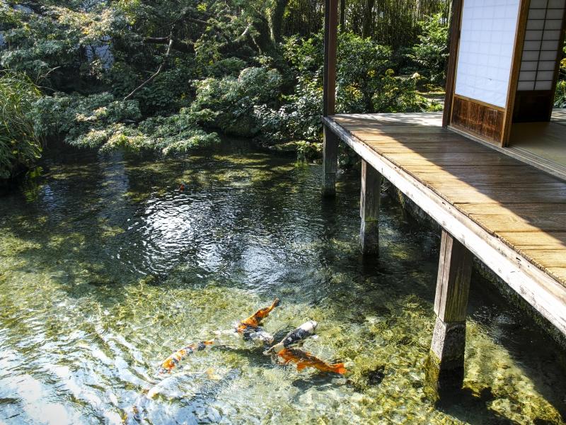 煌く湧水に癒される町 長崎島原で「湧水庭園四明荘」とその周辺を巡る