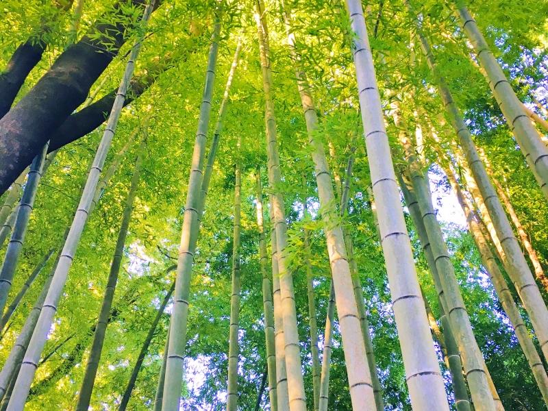 【茨城】陶芸の町!笠間市でおすすめの観光スポット6選