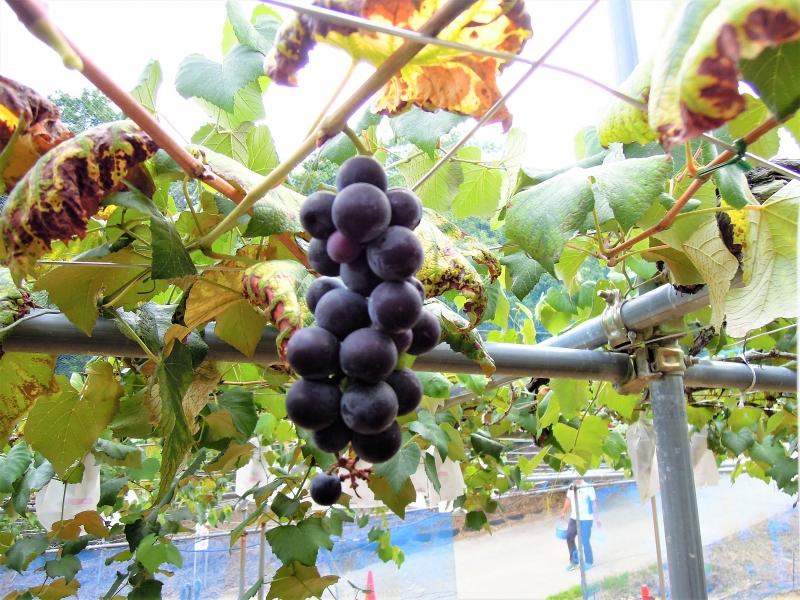 【大阪】観光農園南楽園で季節の味覚狩りを楽しもう
