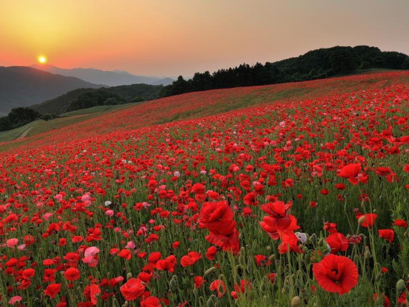 四季折々に楽しめる!埼玉県の絶景スポット12選