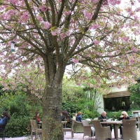 アヴォカ Mount Usher Gardens and Café店