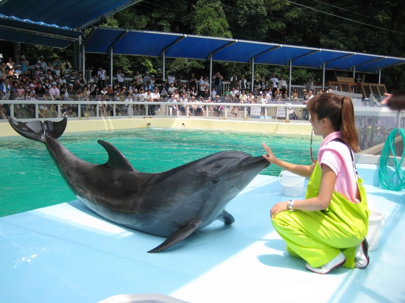 水族館 桂浜 「飼育員へのオンライン餌やり」桂浜水族館の奇策について、担当者に聞いた