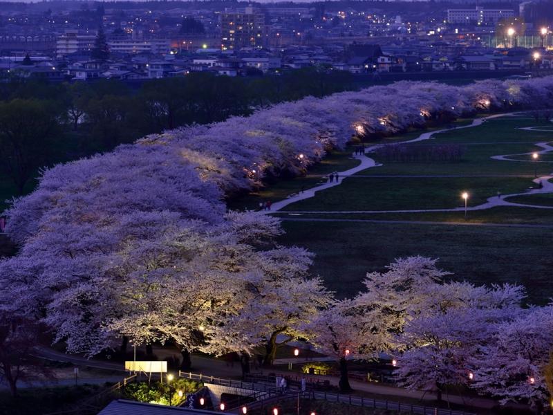 「岩手県 北上展勝地 桜まつり」の画像検索結果