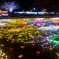 国営昭和記念公園 Winter Vista Illumination